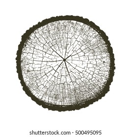 Vector Wood Texture Cross Section Tree Rings Cut Slice Brown Stump Isolated on White Showing Age and Years