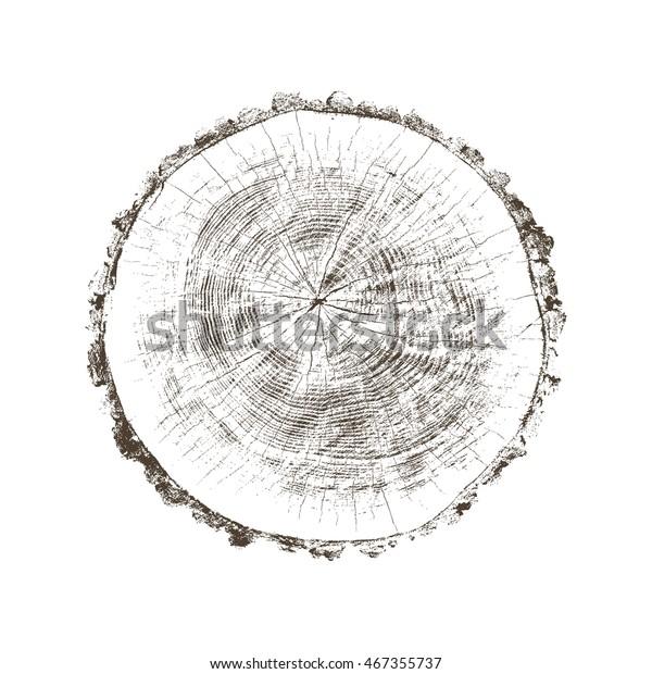 Vektor Holztextur Kreuzung Baumreife schneiden Slice Brown Stumpf einzeln auf Weiß zeigt Alter und Jahre
