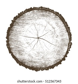 Vector wood texture of a flat chopped cross section of cracked wooden stump isolated on white showing age and years