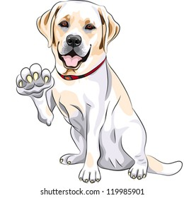 vector yellow cheerful dog breed Labrador Retriever smiles and gives a paw