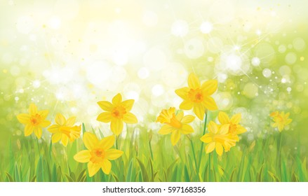 Vector  yellow daffodil flowers background.