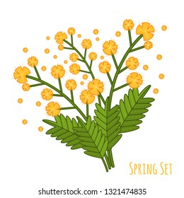 Vector yellow mimosa bouquet, great design for any purposes. Cartoon colorful vector illustration. Spring flower. Vector illustration set. Vector woman's day set in flat style on white background.