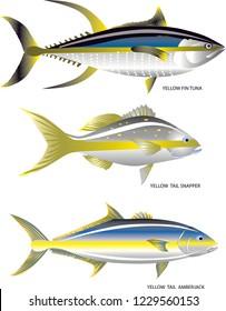 Vector - Yellow Tail Fish, Yellowfin Tuna, Yellowtail Snapper And Yellowtail Amberjack, Marine Fish