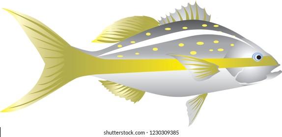 Vector - Yellowtail Snapper, Marine Fish