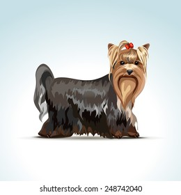 Vector Yorkshire Terrier Dog Isolated on White Background