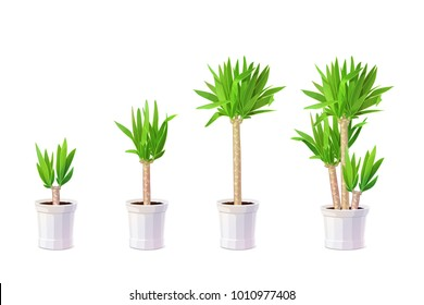 vector yucca tree in pots. Common yucca, filamentosa, aloifolia, aloe yucca, dagger plant. New mexico cartoon graphics collection. Handdrawn potted office, house plant isolated on white background