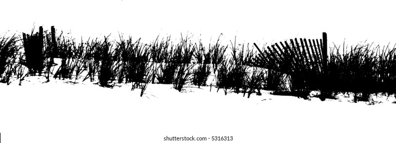 Vectored image of sea oats at beach