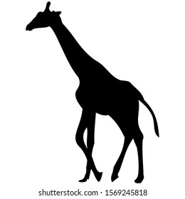 vector-graphic illustration of a giraffe in profile view, isolated on white background