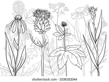 vectorhand drawn medical herbs, line drawing plants, floral background