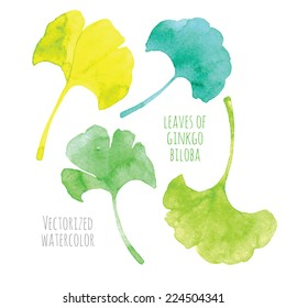 Vectorized watercolor hand drawing - leaf of Ginkgo biloba