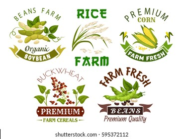 Vegetable, bean and cereal farm emblem set. Fresh corn cob, rice and buckwheat plant with grain, leaves, green pods of soybean and white beans with ribbon banner. Organic farming, agriculture design