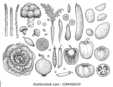 Vegetable collection, illustration, drawing, engraving, ink, line art, vector