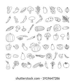 vegetable element doodle line set. Freehand drawing fruit and vegetables on a sheet of exercise book. Vector illustration. Set