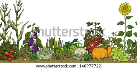 Vegetable garden bed on a white background vector illustration
