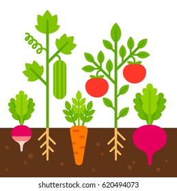 Vegetable garden, simple flat cartoon vector illustration. Cute bright vegetables planted in soil.