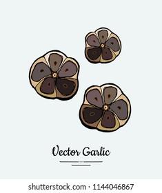 Vegetable garlic black cloves chopped. Hipster hand drawn vector illustration of garlic chop. Hand drawn isolated black garlic for restaurant menu, vegetarian poster, logo, icon, sticker, farm shop.