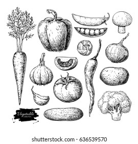 Vegetable hand drawn vector set. Isolated vegetarian engraved style object. Detailed garden food drawing. Farm market product. Great for menu, label, icon, poster, sign