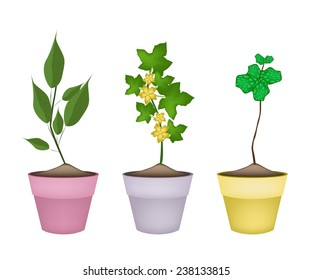 Vegetable and Herb, Illustration of Winter Melon Plant Plant and Peppermint Plant in Terracotta Flower Pots for Garden Decoration.