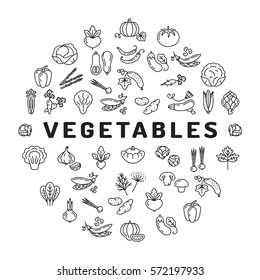 Vegetable icon circle infographics, veggies. Mega collection of isolated vegetables symbols. Thin line icons - tomato salad carrot broccoli cabbage peppers spinach zucchini herbs and etc. Vector