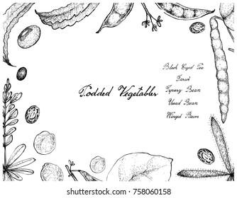 Vegetable, Illustration Frame of Hand Drawn Sketch Fresh Podded Vegetables Isolated on White Background.