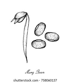 Vegetable, Illustration of Hand Drawn Sketch Fresh Mung Bean and Bean Sprout Hanging on A Twig, Used in Both Sweet and Savory Recipes.