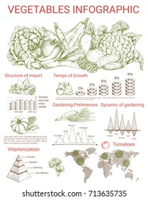 Vegetable infographics design. Graph and chart of gardening and agriculture preferences, tomato cultivation statistic map with carrot, broccoli, cabbage, onion, cucumber and pumpkin sketches