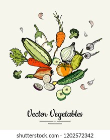 Vegetable isolated hand drawn illustration. Vector hipster hand drawn colored vegetables for vegetarian poster, cooking school, restaurant menu, food article, website, cooking book, shop, festival.