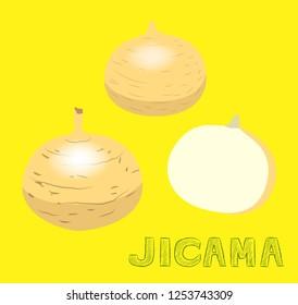 Vegetable Kind Jicama Vector Illustration