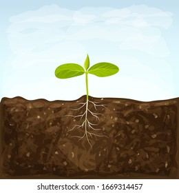 vegetable seedlings growth in fertile ground on blue sky background. one sprout with root system in soil. young green shoot vector illustration. spring sprout with two small green leaves.eco gardening