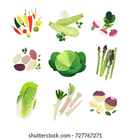 Vegetable set with chili peppers, grey zucchini, turnip, potato, green cabbage, asparagus, napa, horse radish and rutabaga