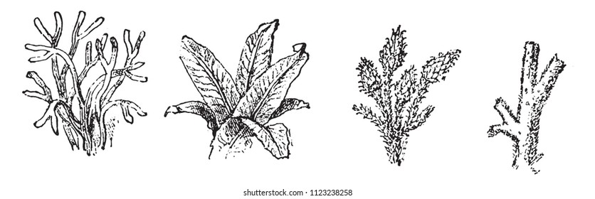 Vegetable Silurian, sea and land, vintage engraved illustration. From Natural Creation and Living Beings.