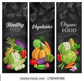 Vegetable sketches on chalkboard, vector farm and garden food. Carrot, tomato, pepper and cabbage, broccoli, garlic, radish and zucchini, corn, asparagus, pumpkin and cucumber, blackboard banners
