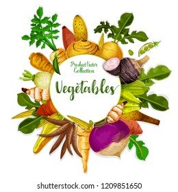 Vegetable tuber roots and farm veggies. Vector vegan sweet potato, radish or turnip and legume bread beans with jicama and cassava manioc. Vegetarian healthy food