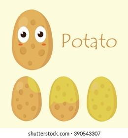 Vegetable Vector -  Fresh Potato. Flat. Isolated