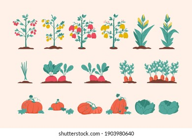 Vegetables agricultural plants set isolated on white background. Beds with tomatoes, peppers, corn, onions, beets, carrots, pumpkins and cabbage. Vector illustration of planting, gardening at farm