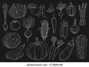 Vegetables chalk sketches of cauliflower and broccoli, chinese cabbage, onion leek, zucchini and pea, tomato, cucumber and pumpkin, beet, asparagus and eggplant, garlic, corn and pepper on blackboard