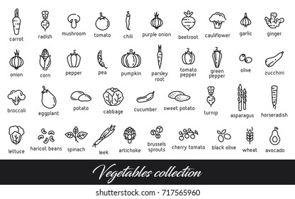 Vegetables collection. Healthy vegetarian food icons set. Isolated vector illustration