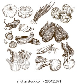 Vegetables collection. Set of hand drawn graphic illustrations with corn, onion, garlic and other herbs and vegetables