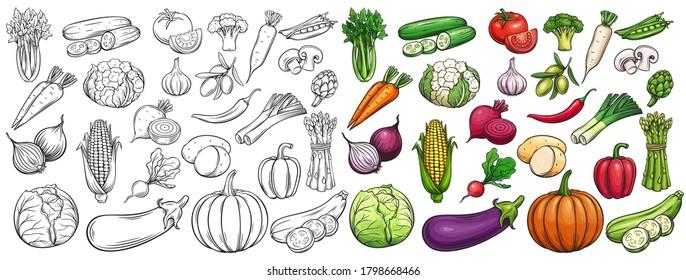 Vegetables drawn vector icons set. Illustration of colored and monochrome vegetables for design farm product, market label vegetarian shop.