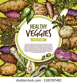 Vegetables and farm veggies sketch, egetarian healthy food. Vector natural vegan organic potato, radish or turnip and legume bread beans with jicama and cassara tuber