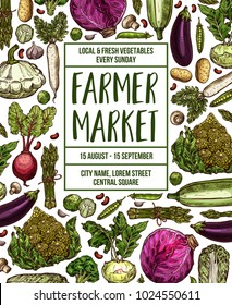 Vegetables farmer market sketch poster. Vector design template of fresh veggies and natural farm organic radish or cauliflower and broccoli cabbage, zucchini squash or cucumber and carrot or tomato