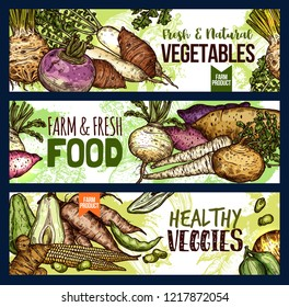 Vegetables food sketch banners of veggie tuber roots and farm. Vector potato, radish or turnip and legume bread beans, natural vegan jicama and cassava manioc for organic vegetarian healthy cooking