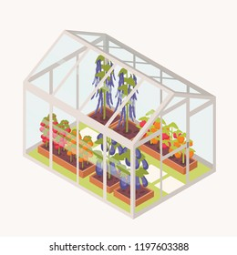 Vegetables growing in boxes with soil inside glass greenhouse. Isometric glasshouse with garden beds for crops cultivation. Agricultural structure isolated on white background. Vector illustration.