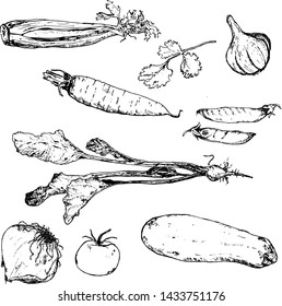 Vegetables hand drawn ink sketch. Set of various farm eco vegetables. Sketches of different eco food. Isolated on white veggies.