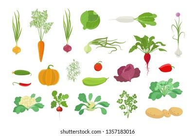 Vegetables harvest plant icon set. Vector farm plants. Onion carrot cabbage, garlic pumpkin dill tomato and many other. Popular vegetables set.