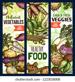 Vegetables healthy food sketch banners. Vector potato and beetroot, celery and arracacia, avocado and peas, corn and beans, jicama. Exotic farm products, vegetarian or vegan diet