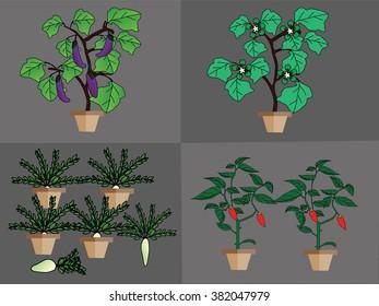 vegetables plant