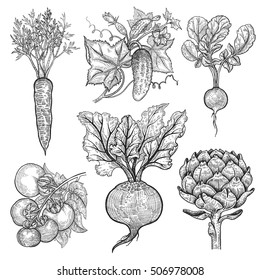 Vegetables set. Cucumber, tomato, radish, carrots, beets, artichoke. Vector illustration. Hand drawing style vintage engraving. Black and white.