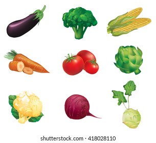 Vegetables, set of isolated, detailed vector illustrations and icons - 