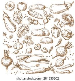 Vegetables Set. Sketch of tomato, cucumber, carrot, broccoli, potato,  eggplant, mushrooms, onion, beet, radish,  pepper and lettuce.